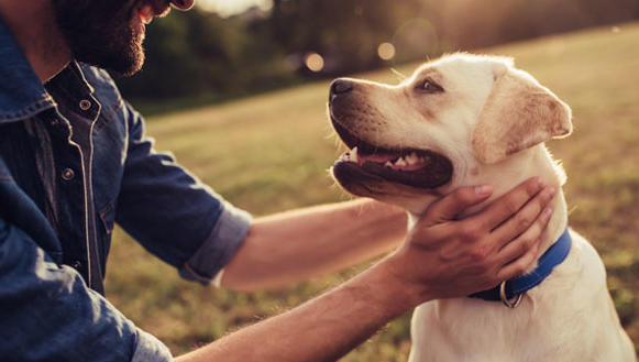 How Pet Bereavement can affect us